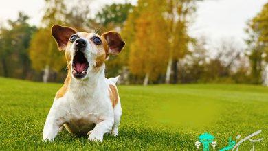 صدای پارس کردن سگ و جلوگیری از زیاد پارس کردن