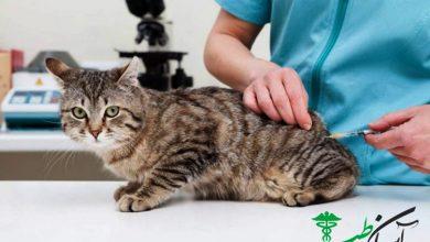 واکسینه شدن حیوانات جهت دریافت مجوز خروج از کشور