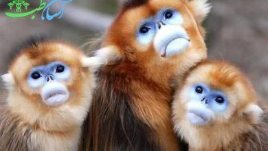 رابطه میمون ها با یکدیگر پشتوانه ای جهت بقای آنها