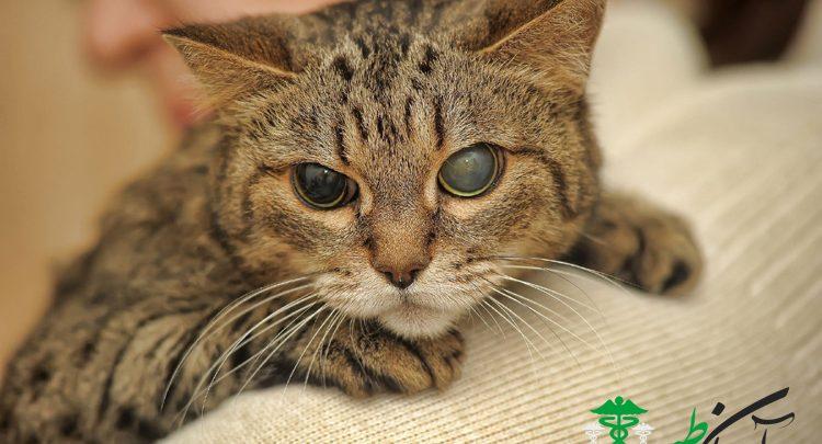 نابینایی ناگهانی گربه ها