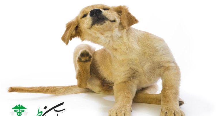 پوست سگها و 4 راه برای مرطوب کردن و رفع خشکی